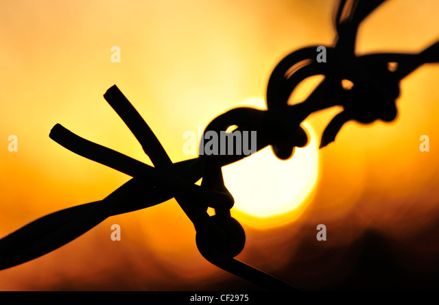 Barbed wire at sunset in Sahuarita, Arizona, USA. - Stock Image