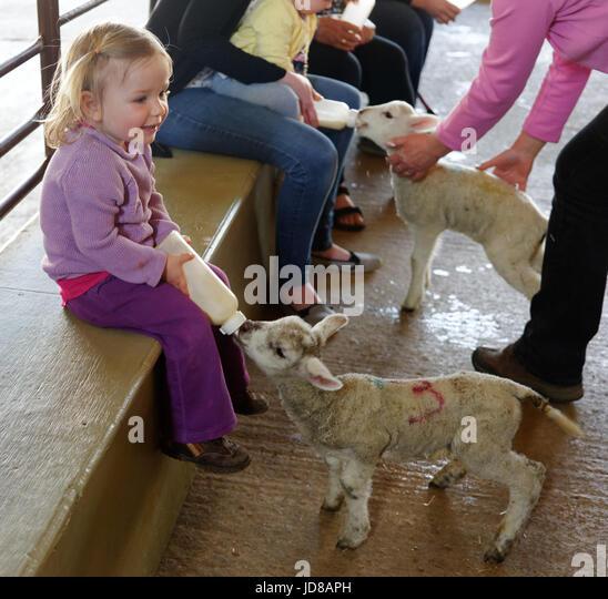 Young children bottle feeding lambs at Putlake Adventure Farm near Swanage in Dorset - Stock Image