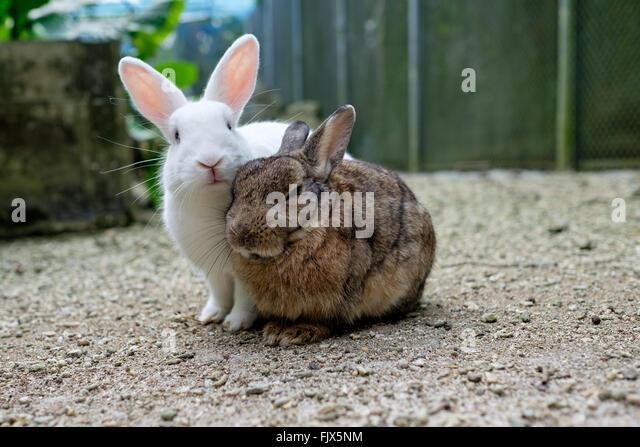 Portrait Of Rabbits On Field - Stock Image