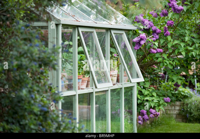 Greenhouse in back garden with open windows for ventilation - Stock Image
