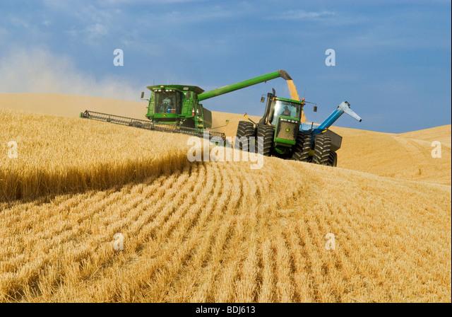 A John Deere combine harvests barley on steep hillside terrain and unloads the harvested barley into a grain cart - Stock Image
