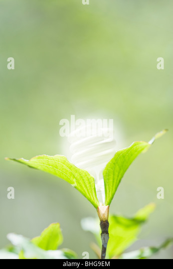 Energy saving lightbulb in a plant - Stock Image
