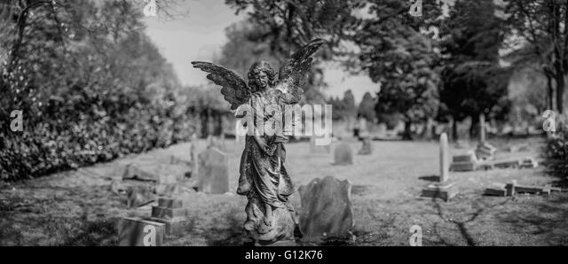 the old graveyard in the forest with the close up of the angel stone sculpture - Stock Image