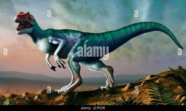 Allosaurus dinosaur, artwork. Allosaurs were large carnivorous theropods that lived during the late Jurassic period - Stock-Bilder