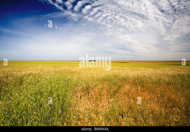 Empty landscape near Brozas, province of Caceres, Spain - Stock Image