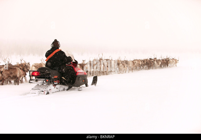 The annual Sami springtime reindeer migration from Stubba nr Gällivare in Sweden through their ancestral lands - Stock-Bilder