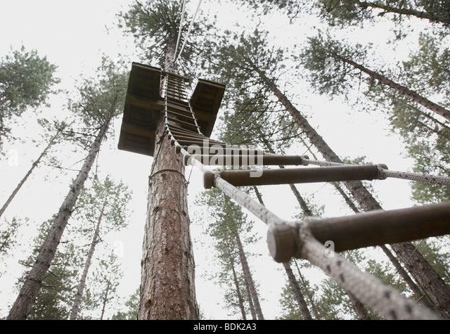looking up rope ladder to climb to the top of a tree - Stock Image