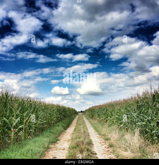 France, Deux Sevres, Single line dirt road among corn fields - Stock Image