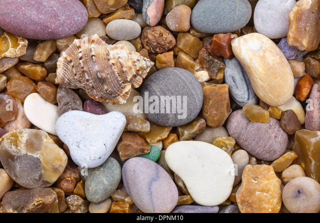 Shell on a pebble with heart - Stock-Bilder