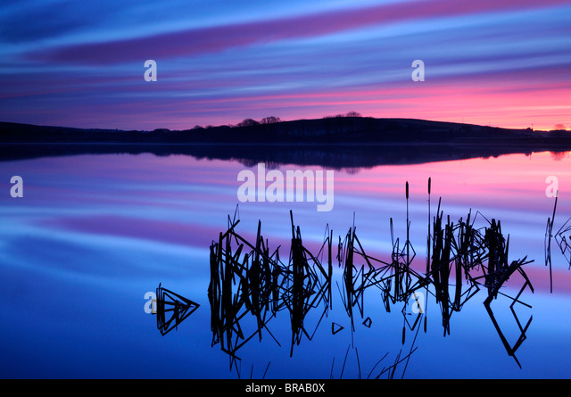 Lower Tamar Lake and silhouetted bulrushes (Typha sp.) at sunrise, Devon / Cornwall border, UK - Stock Image