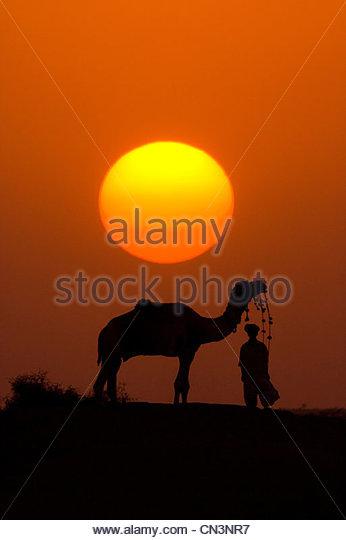 A silhouetted dromedary camel and trader, Pushkar Camel Fair, Rajasthan, India - Stock-Bilder
