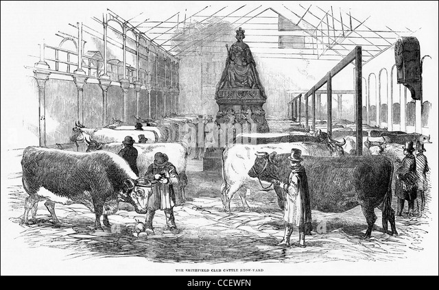 Victorian engraving circa 1852 the Smithfield Club Cattle Show at the Bazaar King Street Portman Square London England - Stock Image