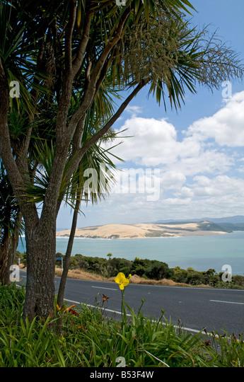 Hokianga Harbour, North Island, New Zealand - Stock Image