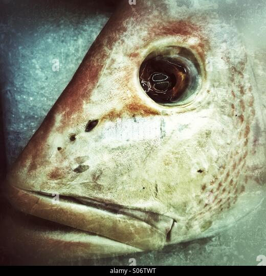 Fish head - Stock-Bilder