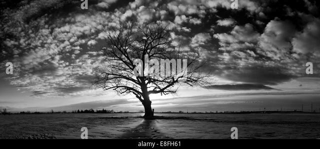 USA, Idaho, Bonneville County, Idaho Falls, Lonely and dreary tree - Stock Image
