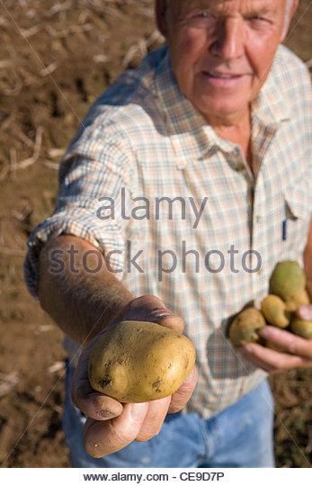 Portrait of farmer holding potato to camera in rural field - Stock Image