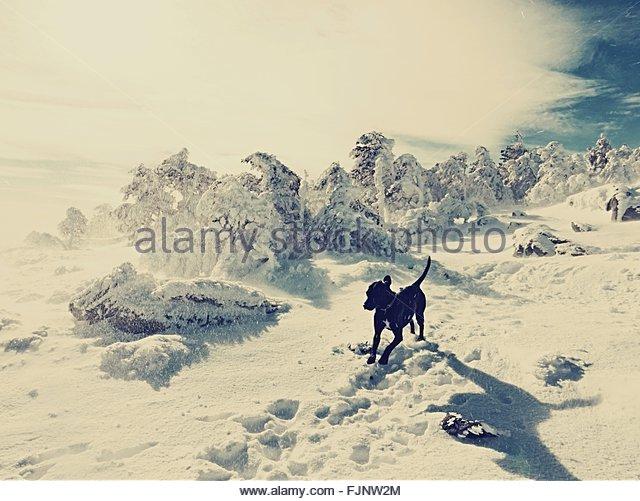 Dog Running On Snow Covered Landscape - Stock-Bilder