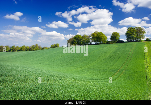 Farm field with young crop. Surrey, UK - Stock Image