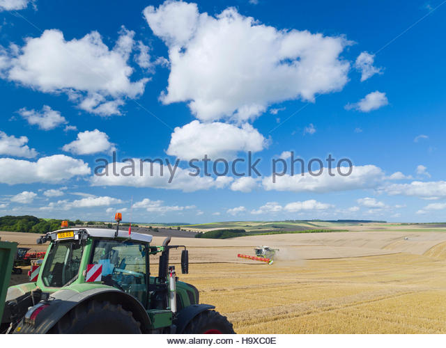 Tractor With Trailer Collecting Wheat From Harvested Field - Stock Image
