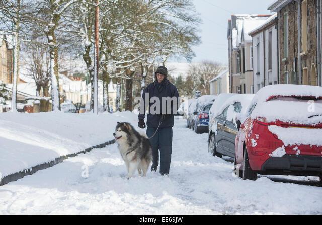 Dog Walks Gwent