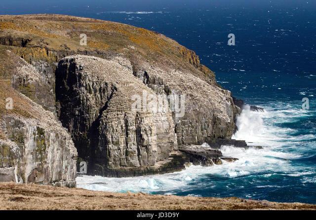 Rugged Coastal Landscape at Cape St. Mary's Ecological Reserve, Cape St. Mary's, Avalon Peninsula, Newfoundland, - Stock Image