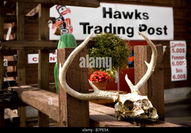 An animal skull lies outside the Hawks trading post store in the Kitigan Zibi Algonquin Native reserve in Quebec, - Stock-Bilder