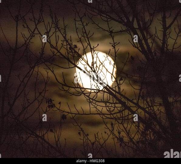 Full Moon peaking through tree limbs in the winter, Idaho, USA - Stock Image
