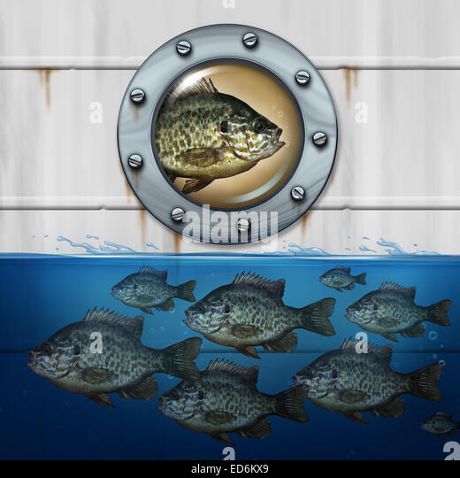 Different thinking business concept as a group of fish swimming in water with an individual noncomformist hitching - Stock Image