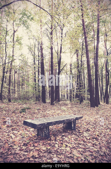 Retro filtered picture of bench in a forest. - Stock-Bilder