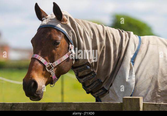 How to Treat Sunburn on Horses photo
