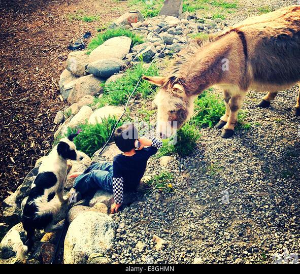 Canada, British Columbia, Boy (12-13) with donkey and dog talking on phone - Stock Image