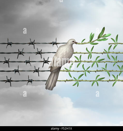 Hope concept as a dove perched on barbed wire transforming into an olive branch as a symbol for good will towards - Stock-Bilder