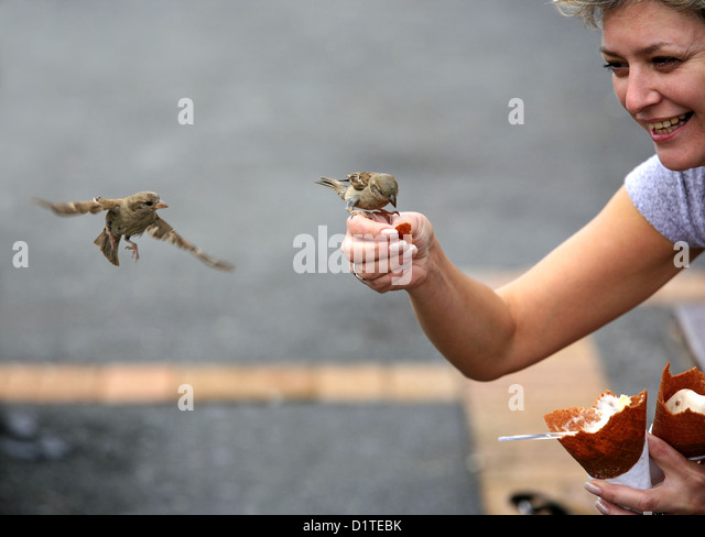 The woman feeds sparrows in the street - Stock-Bilder