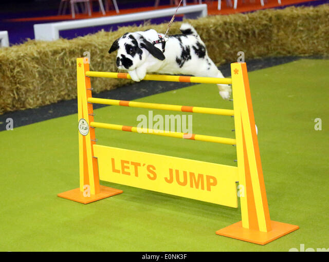 London, UK. 17th May 2014. Rabbit show jumping at the Rabbit Grand National with rabbits from Sweden at the London - Stock Image