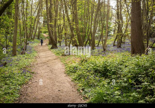 A woodland walk in Spring time in Suffolk - Stock-Bilder
