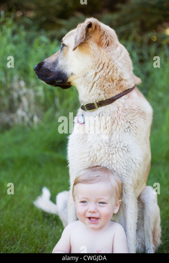 Baby boy sitting with his large white dog on grass. - Stock Image