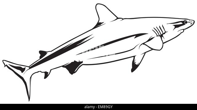 shark drawing stock photos  u0026 shark drawing stock images