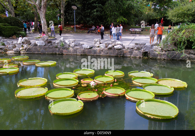 Shanghai China Huangpu District Nanjing Road People's Park lily pads water lilies Nymphaeaceae - Stock Image