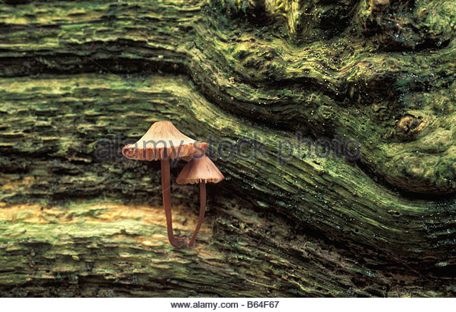 Holland, The Netherlands, Graveland. Fungus. - Stock Image