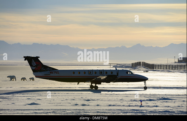 Airplane taxiing on Barter Island LRRS airport Kaktovik Alaska with polar bear sows and cubs on frozen Beaufort - Stock Image