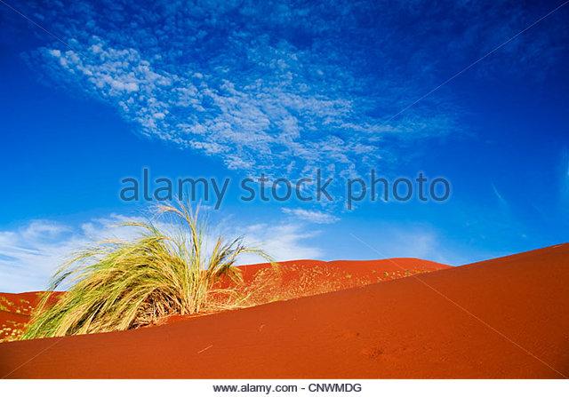 dune grass in Namib desert, Namibia, Namibrand - Stock Image