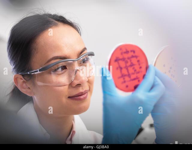 Scientist examining microbiological cultures in a petri dish - Stock-Bilder