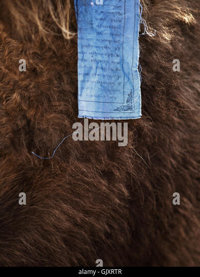 Prayer flag and yak - Stock Image