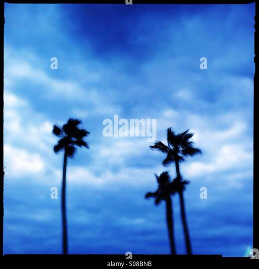 Abstract view of three palm trees. Manhattan beach California USA. - Stock-Bilder