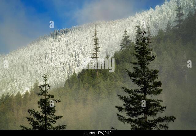 First snow in mountains near Opal Creek. Oregon Cascade Mountains. - Stock Image
