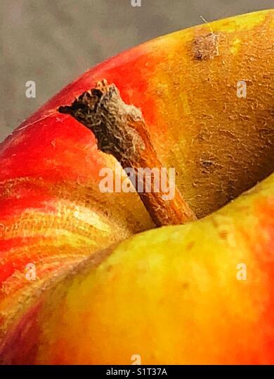 Apple close up - Stock Image