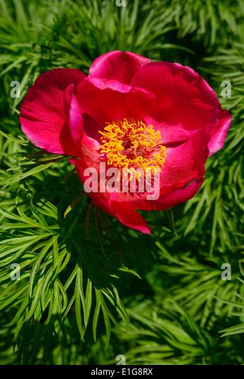 Single Flower Garden : Edwards gardens toronto stock photos