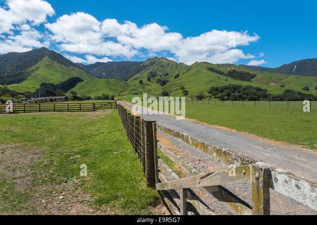 Pasture and cattle fence, Port Jackson, Coromandel Peninsular, New Zealand - Stock Image