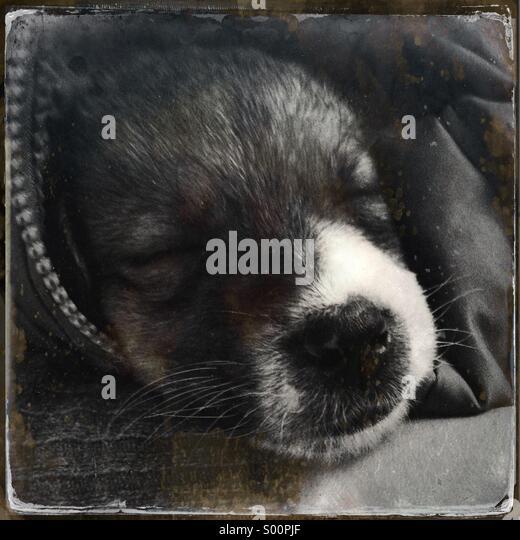 My puppy - Stock Image