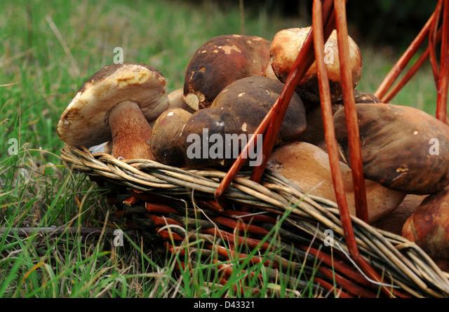 Baskets of mushrooms - Stock Image